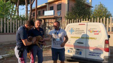 Photo of Poliziotti salvano un cane durante il servizio : la pattuglia della polizia stradale di San Severo agisce prontamente salvandogli la vita