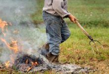 Photo of Abbruciamento residui potatura olivi nel Parco Nazionale del Gargano, il presidente Pazienza chiede alla Regione di rivedere la norma