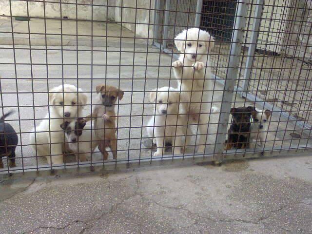 Photo of Adotta un cane al rifugio di San Severo: gratis un kit di benvenuto e un mese di petfood