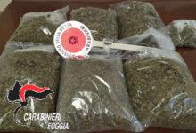 Photo of Sequestrati quasi 3 kg di droga. Arrestato un 52enne di Cerignola; guidava l'autovettura su cui viaggiava con patente revocata.