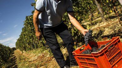 Photo of Blitz degli Ispettori del Lavoro nelle aziende agricole: scattano multe