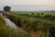 """Photo of """"Lavori di pulizia e manutenzione dei canali affidati alle aziende agricole"""""""